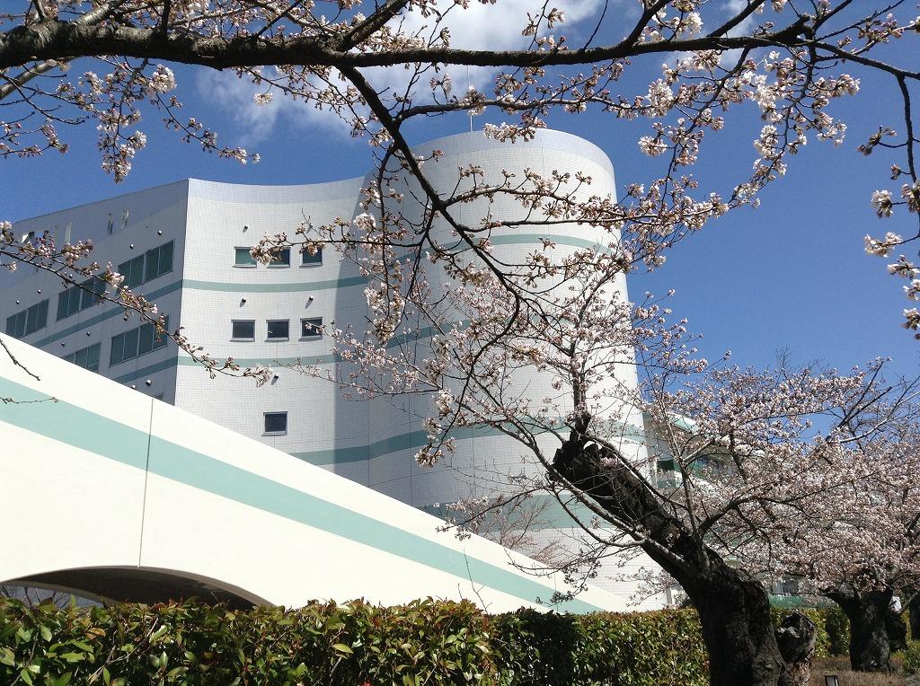 せせらぎ小径の桜が咲き誇ってました(^^)