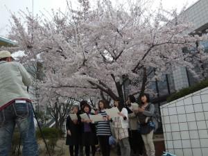 満開の桜の木の下でカメラを前に歌っているのは…マミーコーラスの皆さん?(^^)