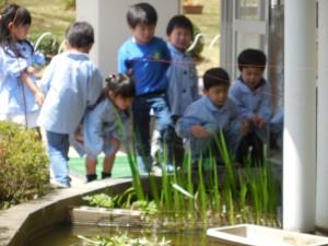 いわば学園内のちょっとしたビオトープ。 水草や生き物に興味津々!