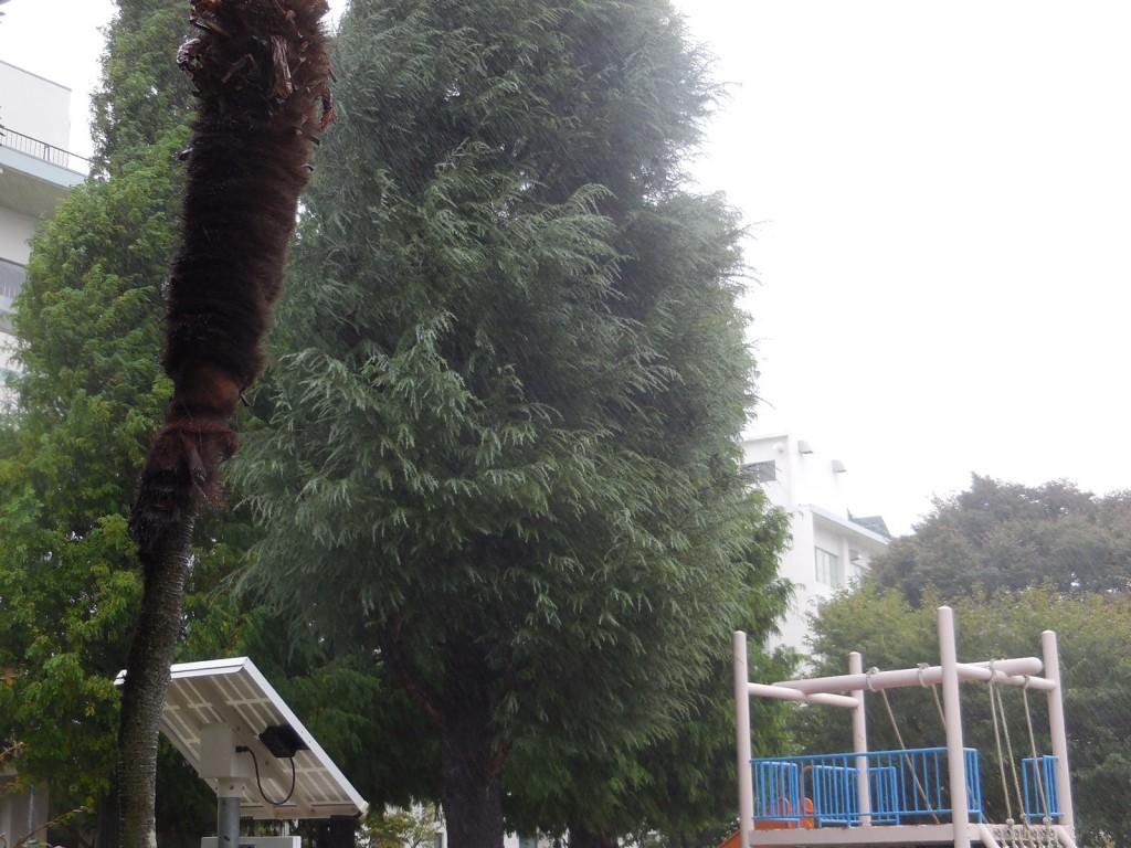 雨風が強くなってます