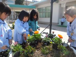 春の陽気の中、お花を植えたり…