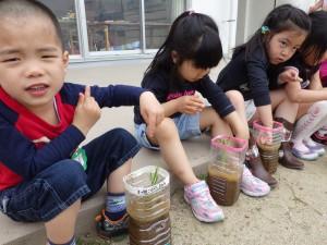 幼稚園での田植え♪おおきくな~れ♪