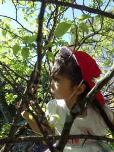 どんどん高く木に登って…