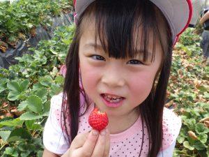 おっきなイチゴ見~つけた!